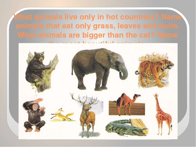 What animals live only in hot countries? Name animals that eat only grass, le...