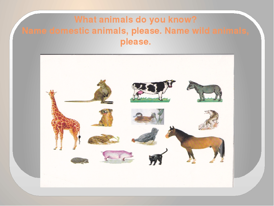 What animals do you know? Name domestic animals, please. Name wild animals, p...