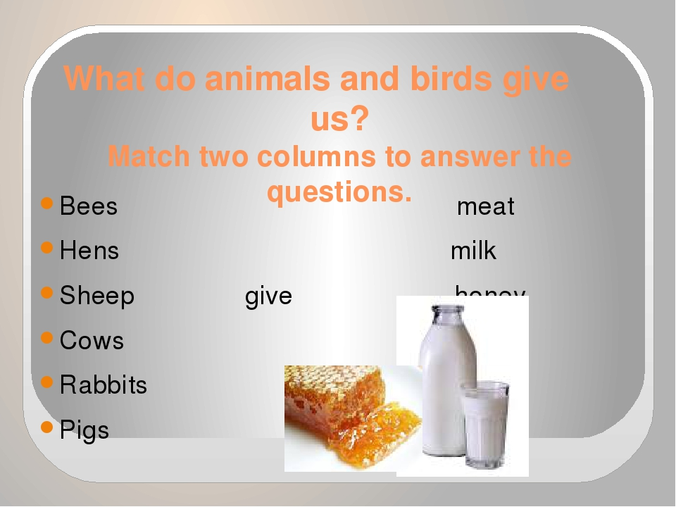 What do animals and birds give us? Match two columns to answer the questions....
