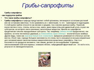 Грибы-сапрофиты Грибы-сапрофиты - как подгруппа грибов Что такое грибы-сапроф