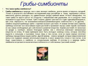 Грибы-симбионты Что такое грибы-симбионты? Грибы-симбионтыв природе, как и с