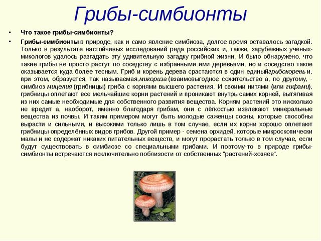 Грибы-симбионты Что такое грибы-симбионты? Грибы-симбионтыв природе, как и с...