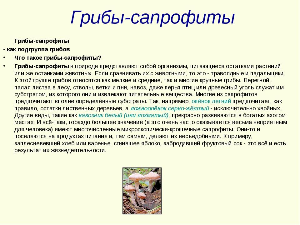 Грибы-сапрофиты Грибы-сапрофиты - как подгруппа грибов Что такое грибы-сапроф...