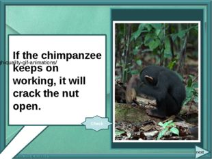 If the chimpanzee (keep on) working, it (crack) the nut open. If the chimpan