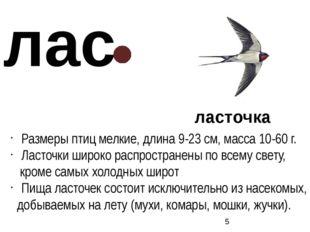 ласточка Размеры птиц мелкие, длина 9-23 см, масса 10-60 г. Ласточки широко р