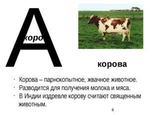 корова Корова – парнокопытное, жвачное животное. Разводится для получения мол