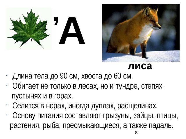 Длина тела до 90 см, хвоста до 60 см. Обитает не только в лесах, но и тундре...