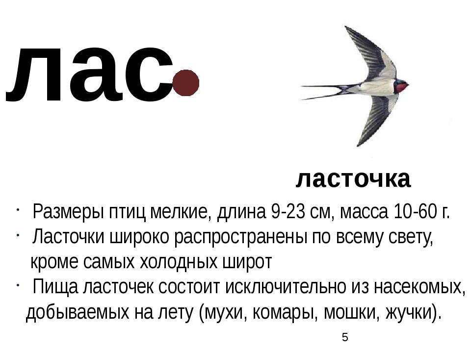 ласточка Размеры птиц мелкие, длина 9-23 см, масса 10-60 г. Ласточки широко р...