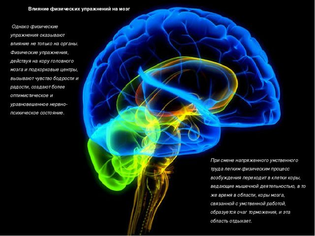 Влияние физических упражнений на мозг Однако физические упражнения оказывают...