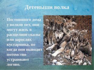 Детеныши волка Постоянного дома у волков нет, они могут жить в расщелине скал