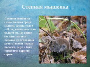 Степная мышовка Степная мышовка - самая мелкая среди мышей. Длина тела 6—8 см