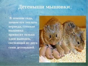 Детеныши мышовки В течение года, точнее его теплого периода, степная мышовка