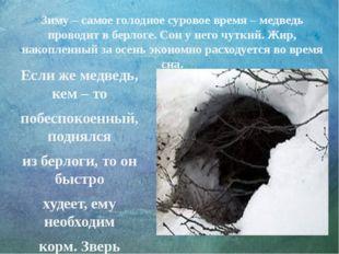 Зиму – самое голодное суровое время – медведь проводит в берлоге. Сон у него