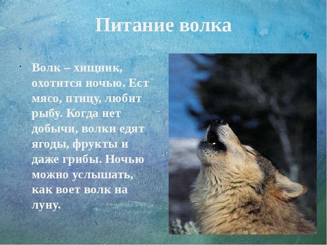 Питание волка Волк – хищник, охотится ночью. Ест мясо, птицу, любит рыбу. Ког...