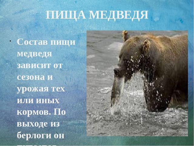 ПИЩА МЕДВЕДЯ Состав пищи медведя зависит от сезона и урожая тех или иных корм...