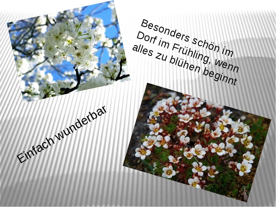 Besonders schön im Dorf im Frühling, wenn alles zu blühen beginnt Einfach wun...