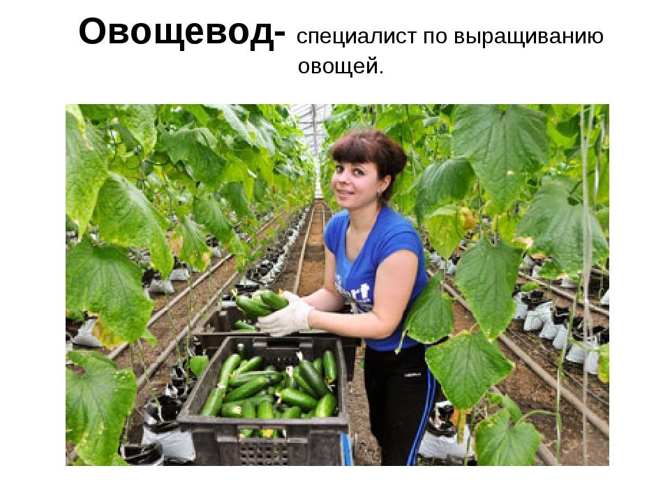 Овощевод- специалист по выращиванию овощей.