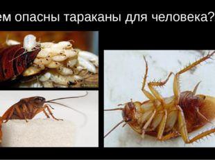 Чем опасны тараканы для человека?