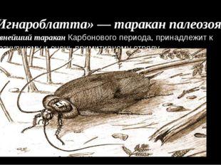 «Игнароблатта» — таракан палеозоя. Древнейший таракан Карбонового периода, п