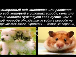 Синантропный вид животного или растения — это вид, который в условиях города,