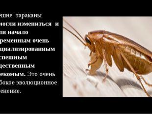 Внешне тараканы –смогли измениться и дали начало современным очень специализ