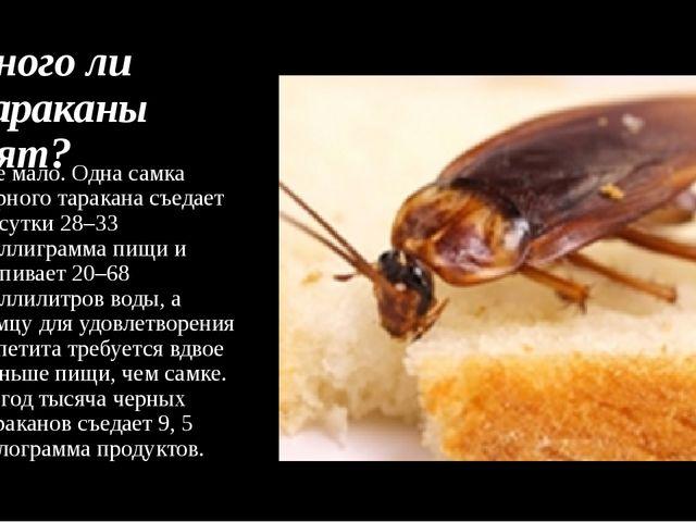 Много ли тараканы едят? Не мало. Одна самка черного таракана съедает за сутки...