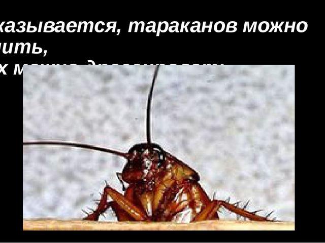 Оказывается, тараканов можно учить, их можно дрессировать.