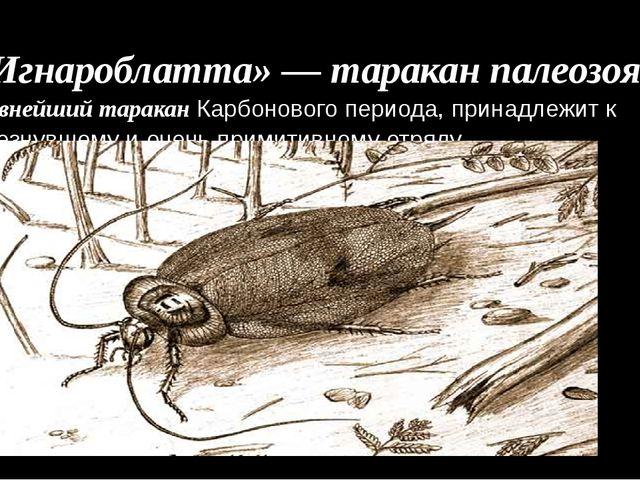 «Игнароблатта» — таракан палеозоя. Древнейший таракан Карбонового периода, п...