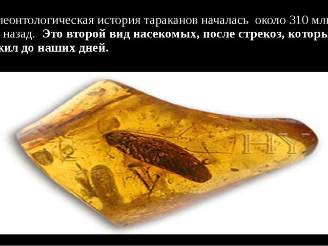 Палеонтологическая история тараканов началась около 310 млн. лет назад. Это...
