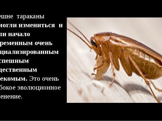 Внешне тараканы –смогли измениться и дали начало современным очень специализ...