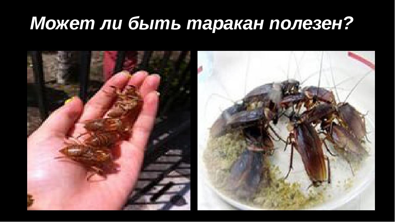 Может ли быть таракан полезен?