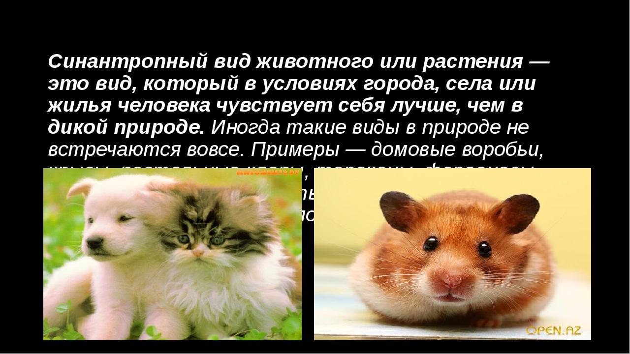 Синантропный вид животного или растения — это вид, который в условиях города,...