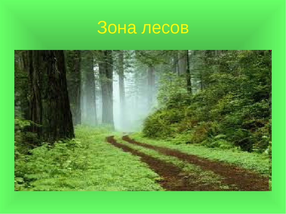 Зона лесов