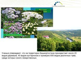 Ученые утверждают, что на территории Башкортостана произрастает около 20 видо