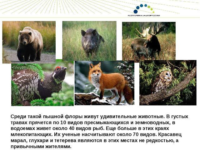 Среди такой пышной флоры живут удивительные животные. В густых травах прячетс...