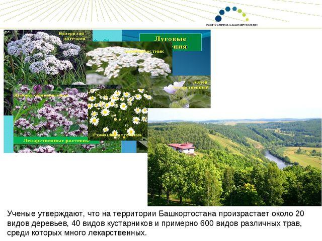 Ученые утверждают, что на территории Башкортостана произрастает около 20 видо...