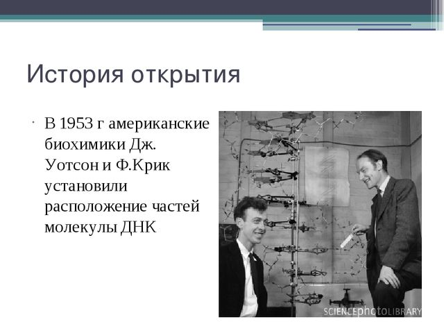 История открытия В 1953 г американские биохимики Дж. Уотсон и Ф.Крик установи...
