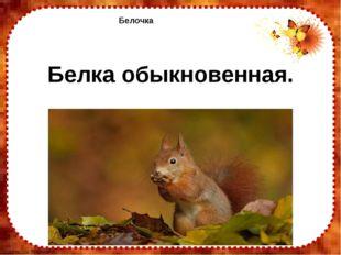 Белочка Белка обыкновенная. FokinaLida.75@mail.ru