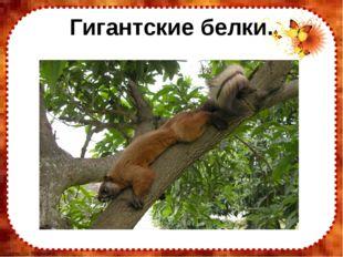 Гигантские белки. FokinaLida.75@mail.ru