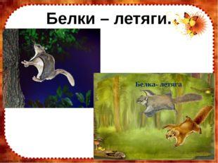 Белки – летяги. FokinaLida.75@mail.ru