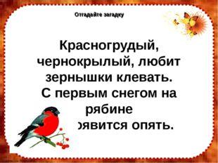 Отгадайте загадку Отгадайте загадку Красногрудый, чернокрылый, любит зернышки