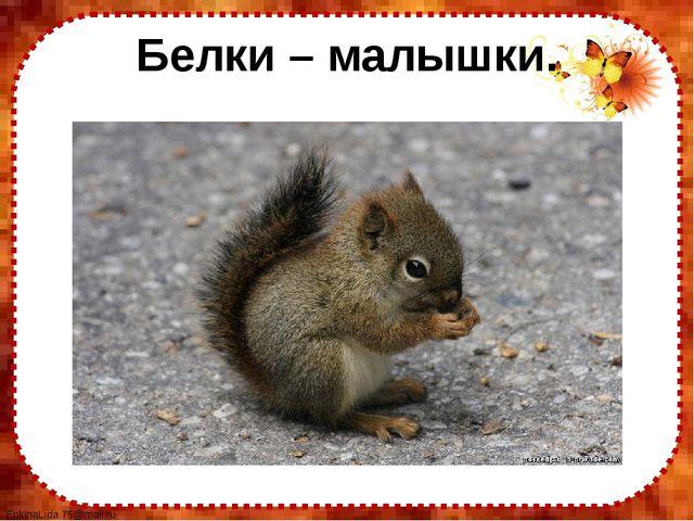 Белки – малышки. FokinaLida.75@mail.ru