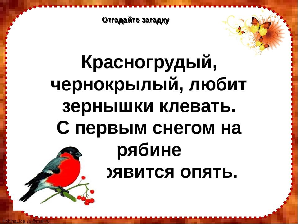 Отгадайте загадку Отгадайте загадку Красногрудый, чернокрылый, любит зернышки...