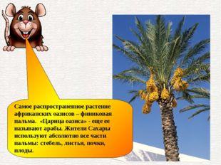 Самое распространенное растение африканских оазисов – финиковая пальма. «Цари