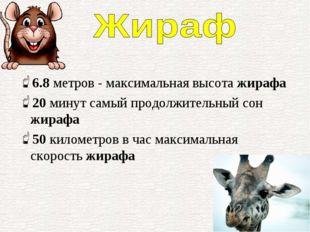 6.8метров - максимальная высота жирафа 20минут самый продолжительный сон жи
