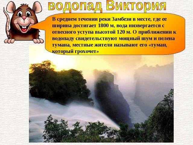 В среднем течении реки Замбези в месте, где ее ширина достигает 1800 м, вода...