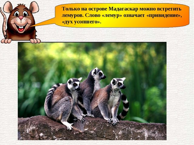 Только на острове Мадагаскар можно встретить лемуров. Слово «лемур» означает...