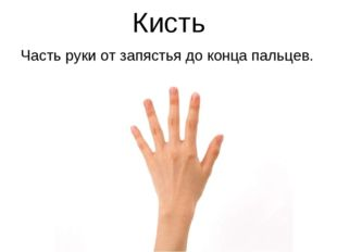 Кисть Часть руки от запястья до конца пальцев.