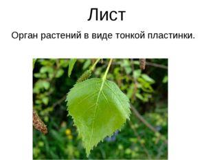 Лист Орган растений в виде тонкой пластинки.