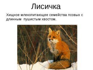 Лисичка Хищное млекопитающее семейства псовых с длинным пушистым хвостом.